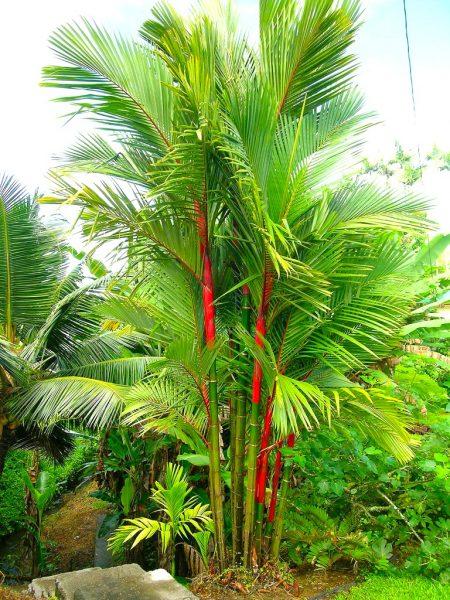 Sealing Wax/ Lipstick Palm